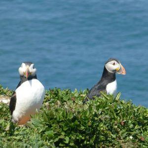 Bild Im Pembrokeshire Nationalpark gibt es viel zu entdecken...