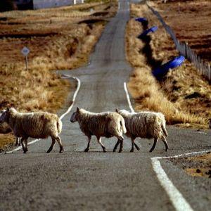 Bild Aufgepasst! Überall am Wegrand gibt es tolle Tiere zu entdecken