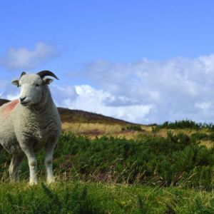 Bild Die Natur des Exmoor Nationalpark