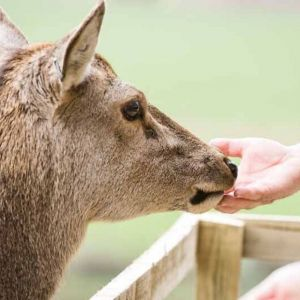 Bild Zutrauliche Tiere freuen sich, gefüttert zu werden