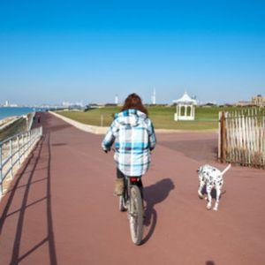 Urlaub mit Hund England - die Highlights