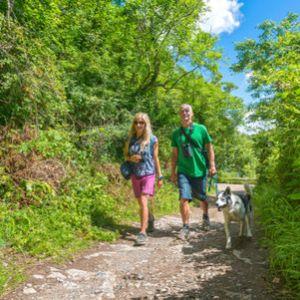 Insidertipps für Ihren Urlaub mit Hund in Wales