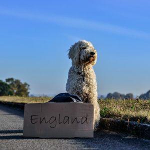 Seite 'Urlaub mit Hund ' anzeigen