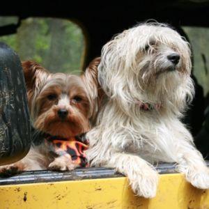 Seite 'Reisen mit Hund' anzeigen