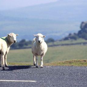 Wo man Tiere noch hautnah erleben kann - der Exmoor Nationalpark