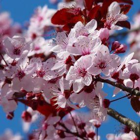Blütenzauber - Gartenreise England