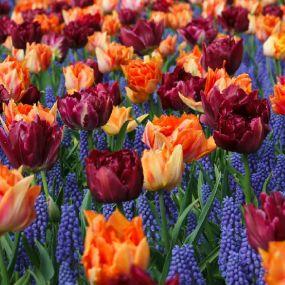 Wunderschöne Blumenfelder - Gartenreise Südengland