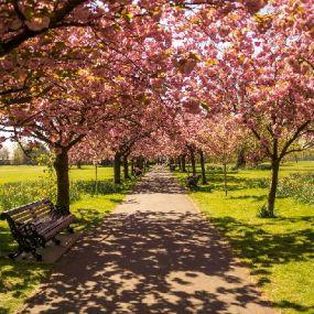 Wunderschöne Alleen prägen die englischen Gärten - Zeit für Entspannung