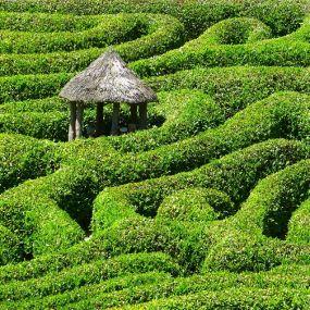 Glendurgan Maze - Verlaufen Sie sich im Gartenlabyrinth