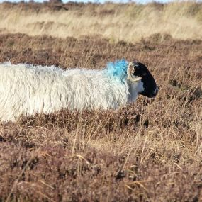 Besuchen Sie den Dartmoor Nationalpark und treffen Sie auf einheimische Tiere - Gartenreise England