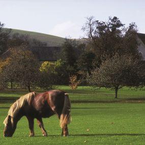 Der New Forest - hier laufen die Ponies frei herum und haben überall Vorfahrt