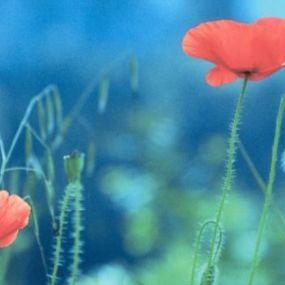 Willkommen in der Welt der Blüten!