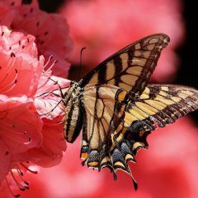 Flora und Fauna bestaunen auf einer Gartenreise