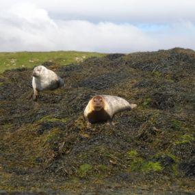 Seehunde in Schottland? Gehen Sie auf Entdeckungstour im Moray Firth!