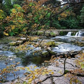 Natur pur in den Yorkshire Dales