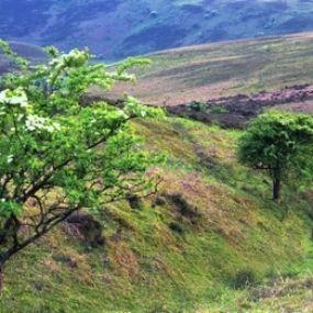 Natur pur im Exmoor Nationalpark