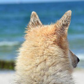 Urlaub mit Hund in Südengland