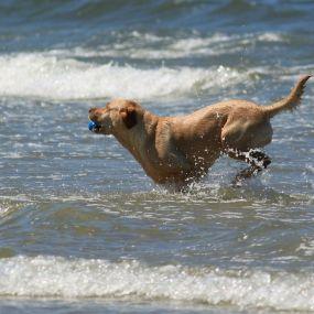 Abkühlung - Urlaub mit Hund am Meer