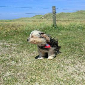 Immer mit der Nase dem Wind entgegen - Urlaub mit Hund