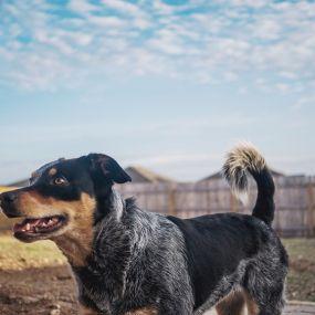 Südengland auf vier Pfoten - Urlaub mit Hund