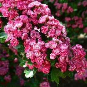 Genießen Sie die wundervollen Farben der Natur - Gartenreise  England