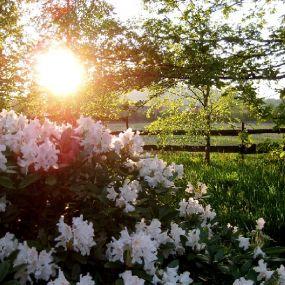 Genißen Sie den Moment - Gartenreise England