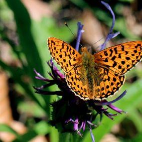 Flora und Fauna bestaunen auf einer Gartenreise in England