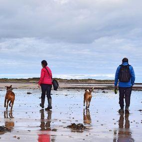 Strandwandern mit Hund