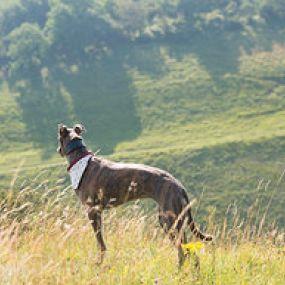 Mit dem Hund durch die Highlands